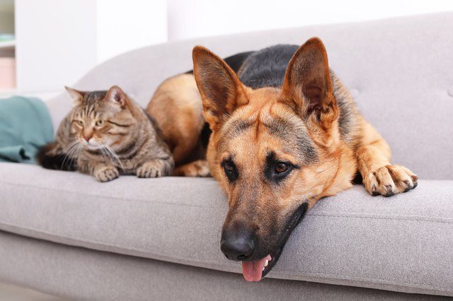 Adorable cat аnd dog resting tоgеthеr оn sofa indoors. Animal friendship