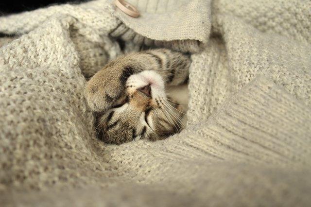 Завернутый котенок в шерстяной свитер