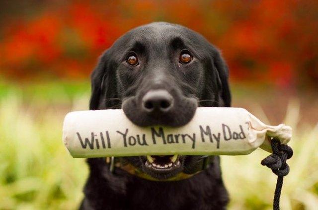 7 marriage proposal ideas involving cute animals cuteness