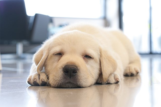 Can I Keep A Puppy Awake During The Day Cuteness
