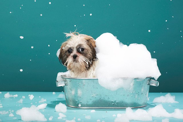 How Often Can I Give My Itchy Dog A Bath