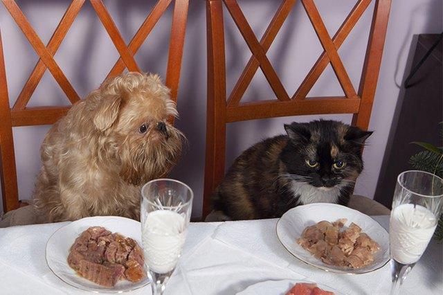 Can U Feed A Dog Cat Food