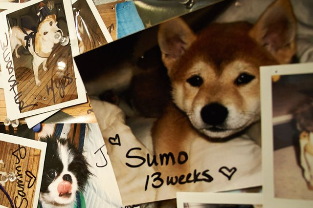 Do Dogs Have Memories Like Humans