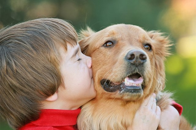 Image of: Dogs Do Dogs Like Hugs And Kisses Cuteness Do Dogs Like Hugs And Kisses Cuteness