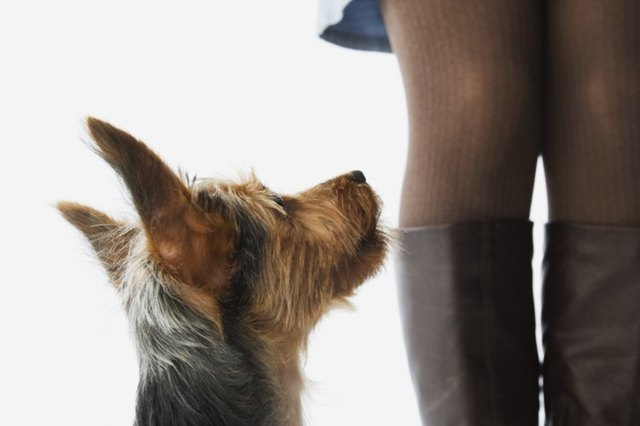 how to train your dog to stop licking