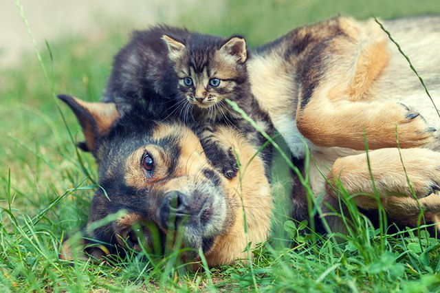 Prepare Your Pooch & How to Introduce a New Kitten to a Dog | Cuteness