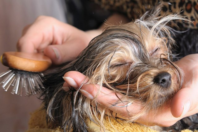 How To Keep Your Dog From Becoming Matted Cuteness