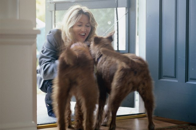 How to prevent dogs from peeing when excited cuteness the best way to stop your dog from peeing when he gets excited is to teach him to control that behavior with some positive reinforcement and some behavior m4hsunfo