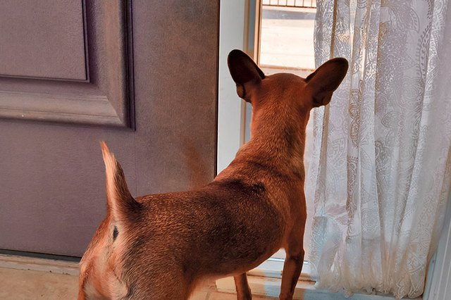 How To Stop A Dog From Barking At Visitors Cuteness