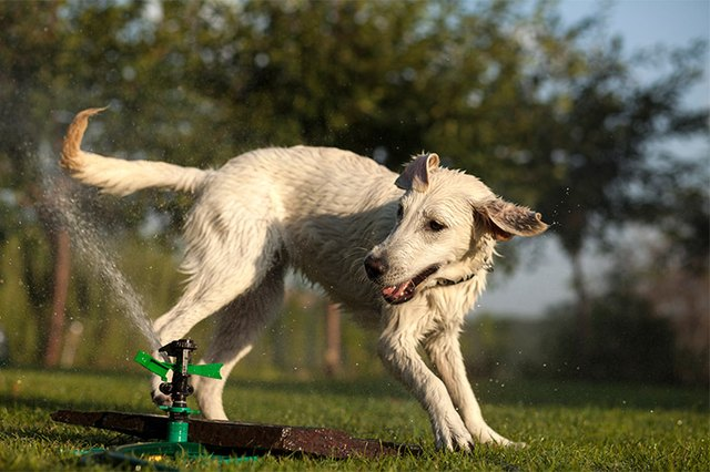 keeping a dog away from sprinklers cuteness