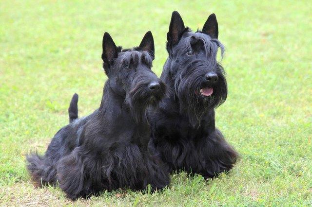Rough Coats Vs Soft Coats On Dogs Cuteness