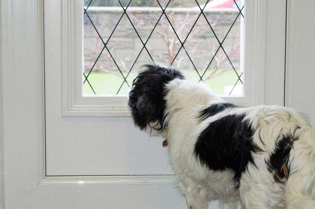My Dog Jumps On Glass Doors Cuteness