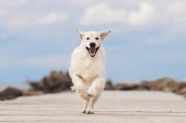 Dog Barks At Strangers When Walking