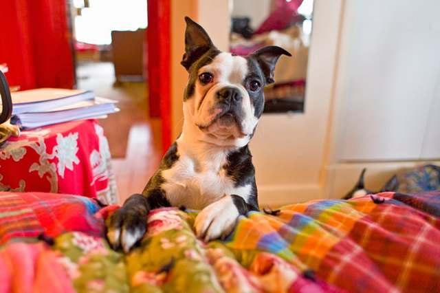 How To Stop A Dog Barking Early