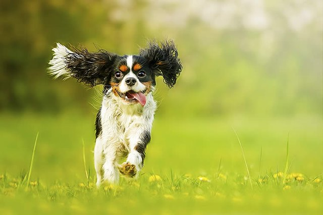 Fastest dog in the world mph