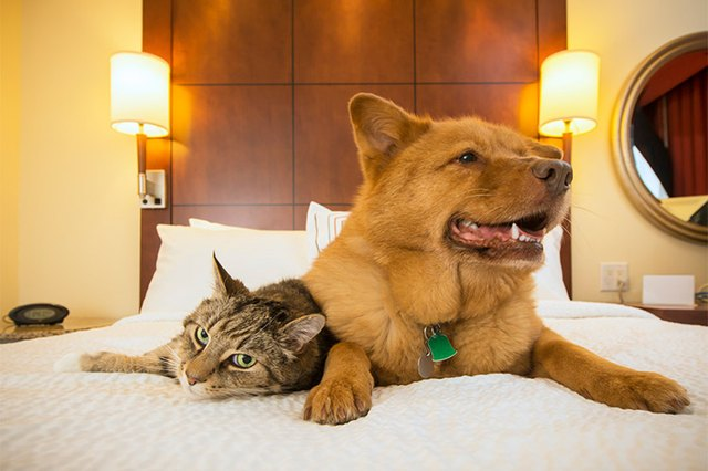 It S Always Good To Know Which Hotels Are Pet Friendly Especially If You Never Like Leaving Your Best Friend At Home When Vacation Time