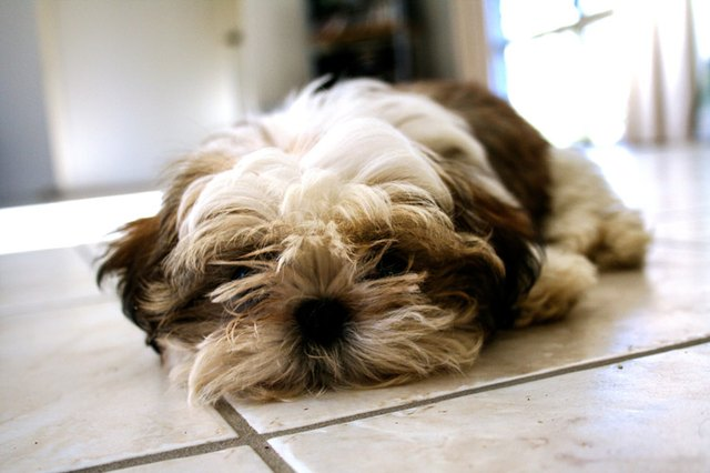 Why Do Dogs Scratch Tiled Floors Cuteness