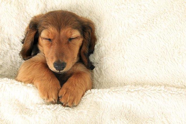 Why Do Dogs Sleep All The Time Cuteness Classy Dog Sleep Pattern