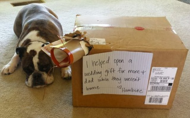 16 Reasons Why Pet Owners Can T Have Nice Things Cuteness