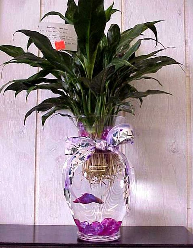 How to care for a betta fish in a vase cuteness for Caring for a betta fish in a bowl