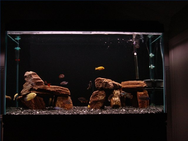 how to clean dry algae off fish tank