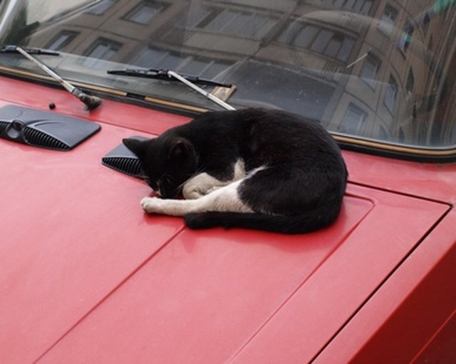 how to keep cats off cars cuteness. Black Bedroom Furniture Sets. Home Design Ideas