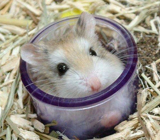 how changing hamsters sleep cycle cuteness