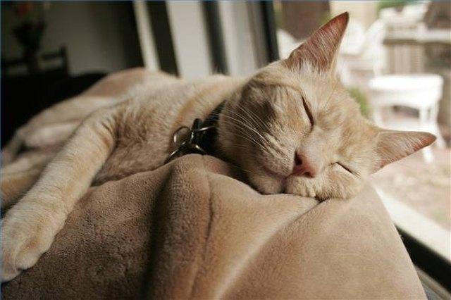 feline distemper symptoms