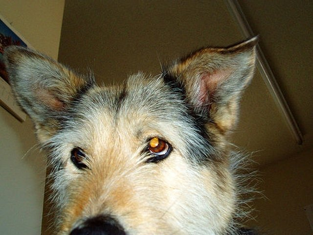 About Polysporin Ear Drops For Dogs Cuteness