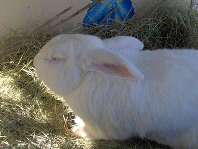 Outside Rabbit Hutch
