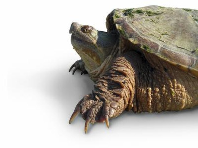 Types of Small Pet Water Turtles | Cuteness