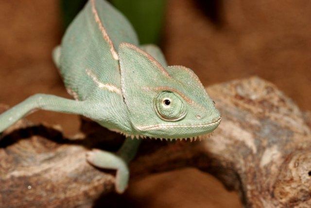 Diy Reptile Humidifiers Cuteness