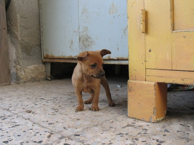 How To Estimate The Size Of Puppies As Full Grown Dogs Cuteness