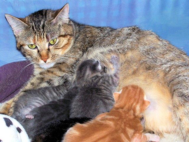 Kittens Nursing Mother Cat