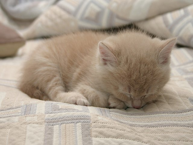 How To Get Rid Of Fleas On Young Kittens Cuteness