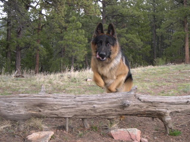 How to Certify My Dog As a Service Dog in Colorado | Cuteness