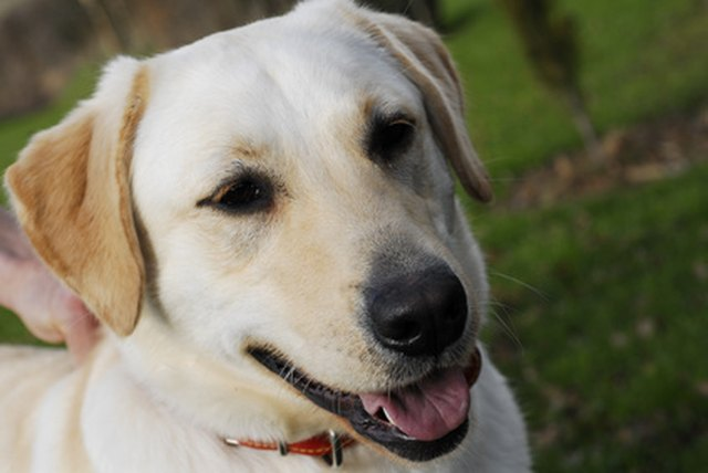 Additives To Avoid In Dog Food