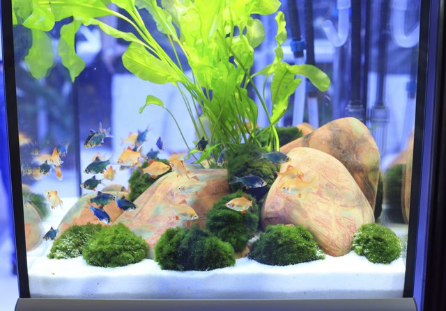 how to lower nitrate in a fish tank cuteness