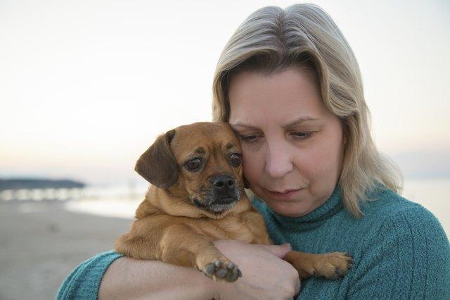 Service Dogs For Depression Cuteness