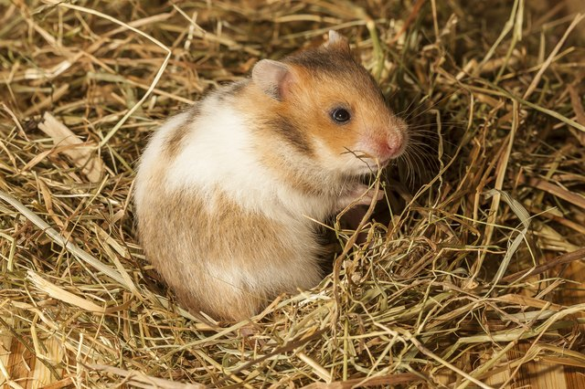 Spray and Powder Treatments for Hamster Mites