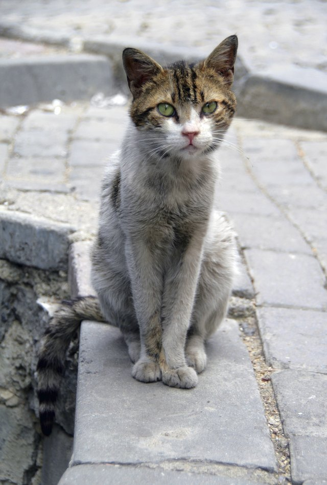How to Get Rid of a Stray Cat | Cuteness