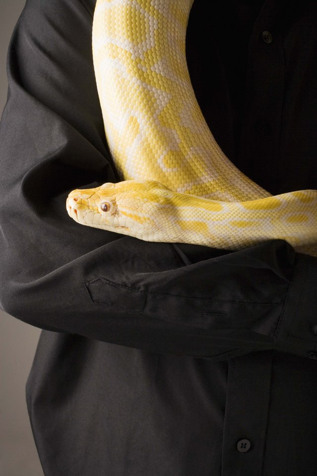 What Is A Yellow Snake Cuteness