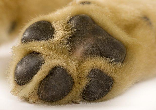 dog paw cancer cuteness