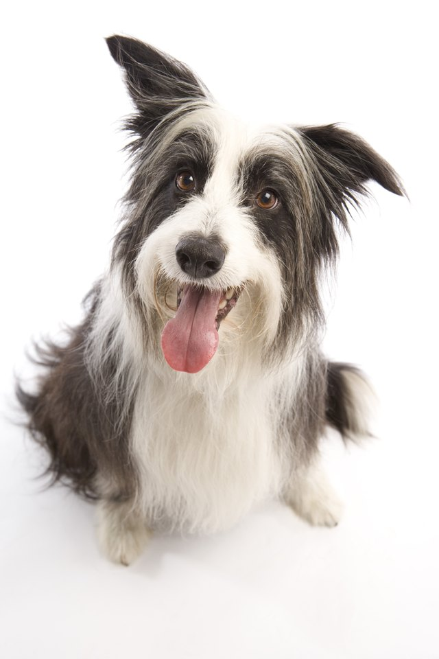 Natural Food Laxatives For Dogs