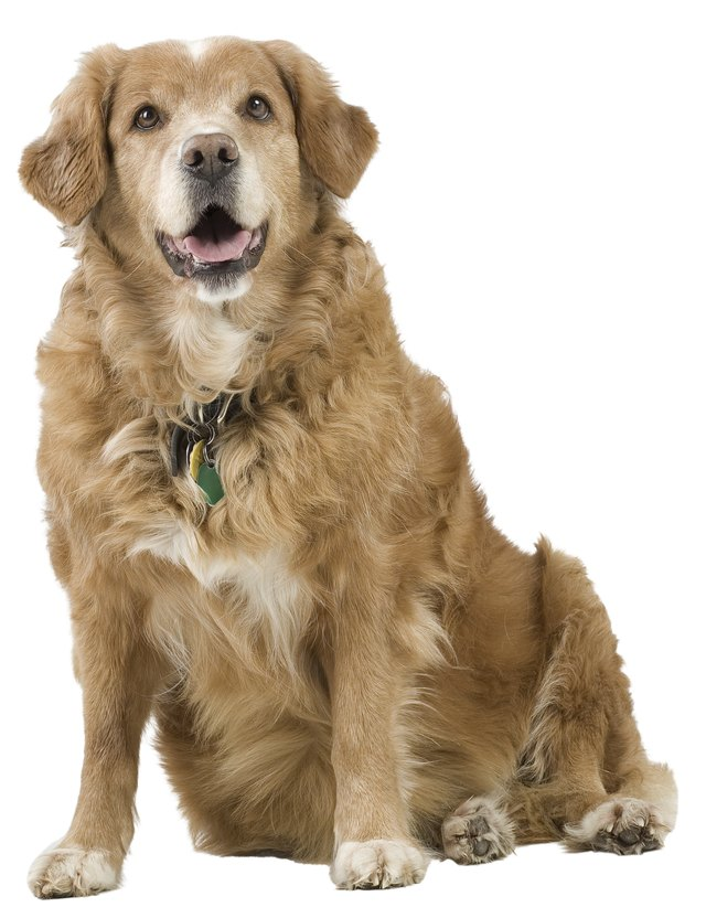 What Can Help Stop Diarrhea In Dogs
