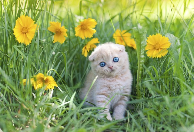 How To Make Cats Stop Pooping In Flower Beds And Gardens Cuteness