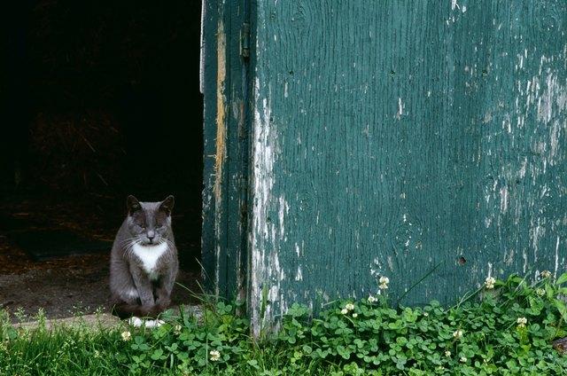 How To Change Indoor Cats To Outdoor Cats Cuteness