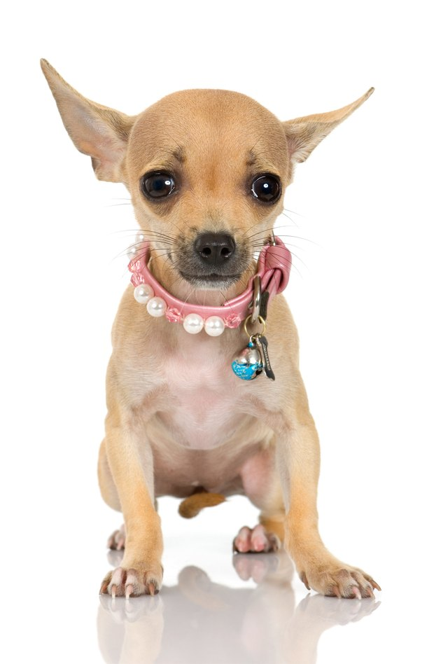 How To Put Bows On Dogs Ears
