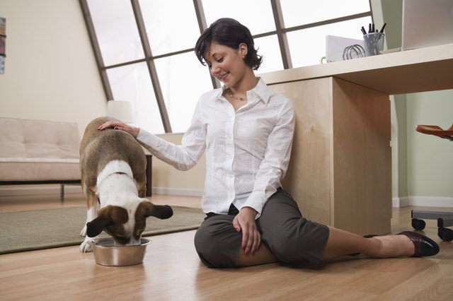 What Food Will Firm Up My Dog S Stool And Prevent The Glands From Being Full