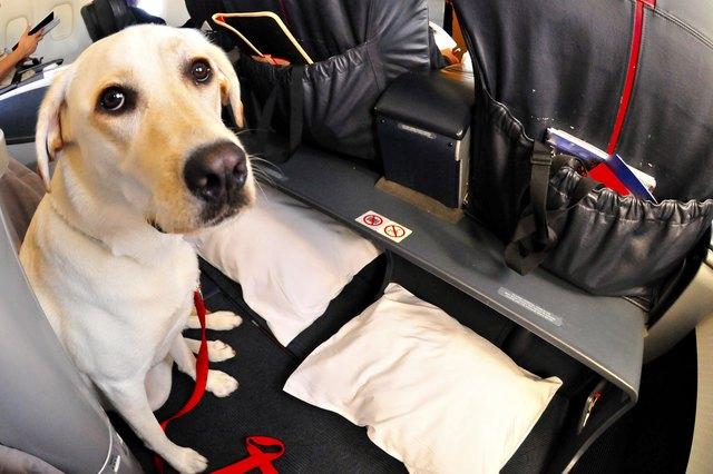 service dog requirements in california | cuteness